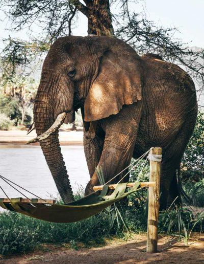 Encountering-an-elephant-up-close-Kenya