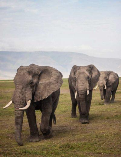 Green-inspirations-tanzania-1-ngorongoro-crater