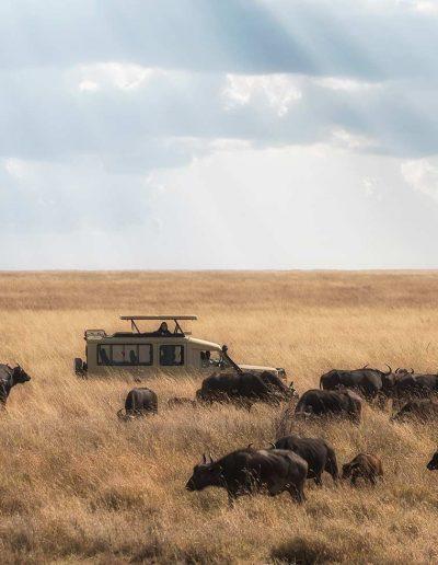 Safari truck on the Serengeti