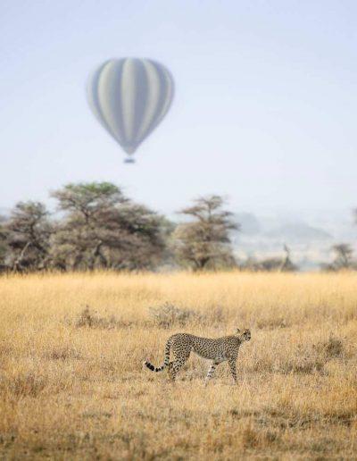 A balloon over the Serenegti plains
