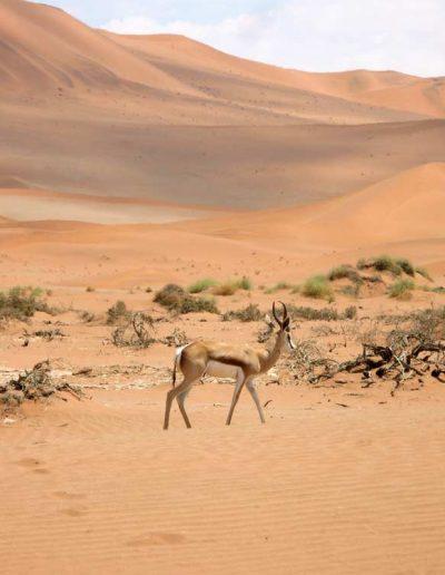 LIfe in the Namibian desert, Sossusvlei, Namibia