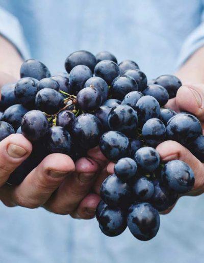 Wine  — NextUp MICE Georgia