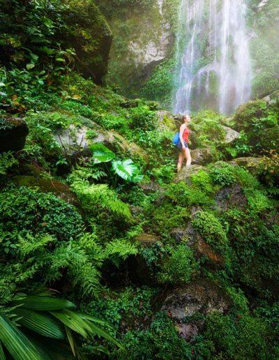 Quetzal Motivo - Honduras slide 3 jungle